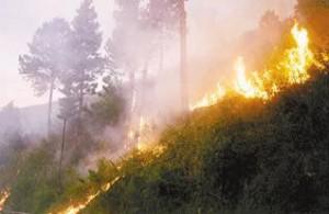<!--:IN-->Hutan Gunung Susuru Kab. Ciamis Terbakar <!--:-->