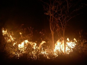 <!--:IN-->Kebakaran Hutan Ciremai Kuningan Meluas <!--:-->