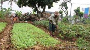 <!--:IN-->Petani Sayur Kesulitan Dapat Air Tanah<!--:-->