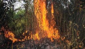 Pemerintah Kumpulkan Bukti Perusahaan Pembakar Hutan di Riau