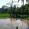 kampung cinangneng3