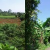 kampung cinangneng8