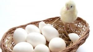 Awas, Selain Beras Ada juga Telur Berbahan Plastik